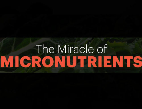 What Micro-nutrients you most likely are deficit on?